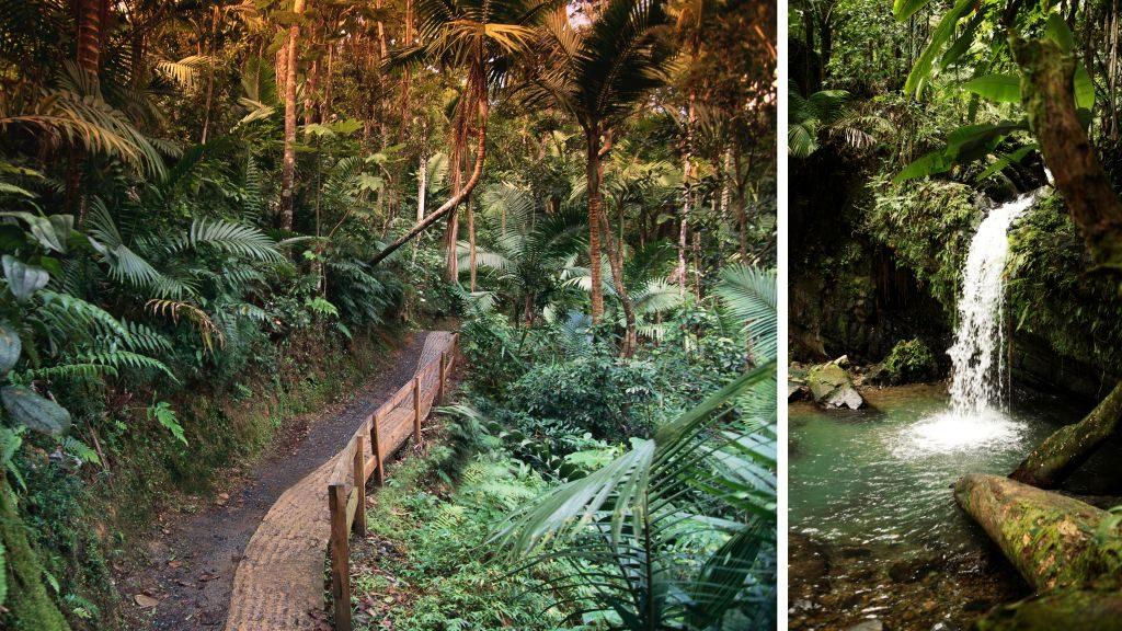Trail in El Yunque Rainforest