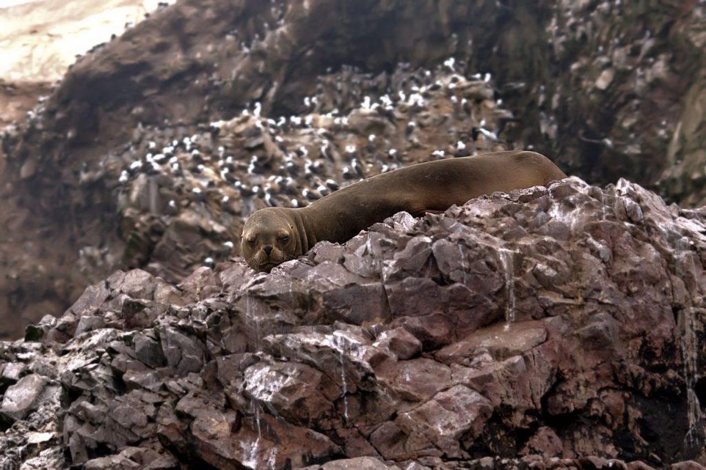 peru-biodiversidad