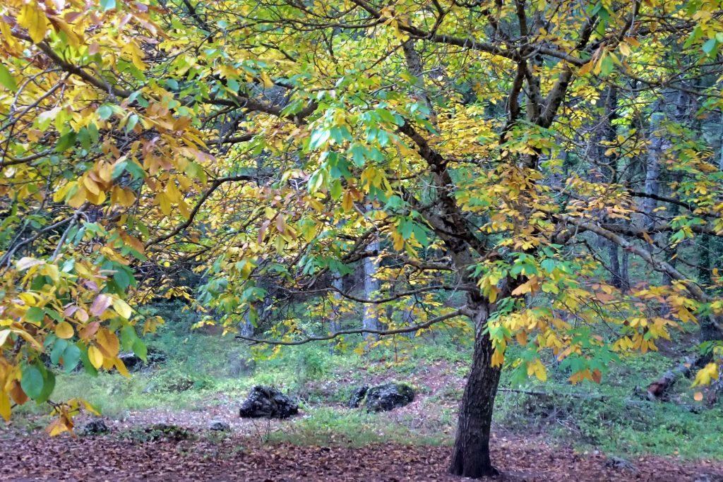 otono-parque-natural-los-calares