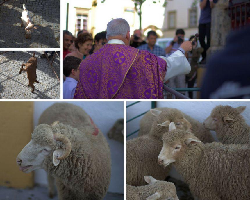 Bendición de los corderos