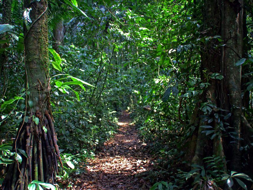 Sendero en la selva peruana