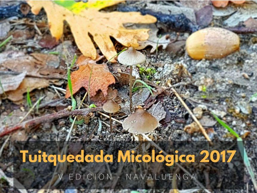 Tuitquedada Micológica 2017 en Navaluenga