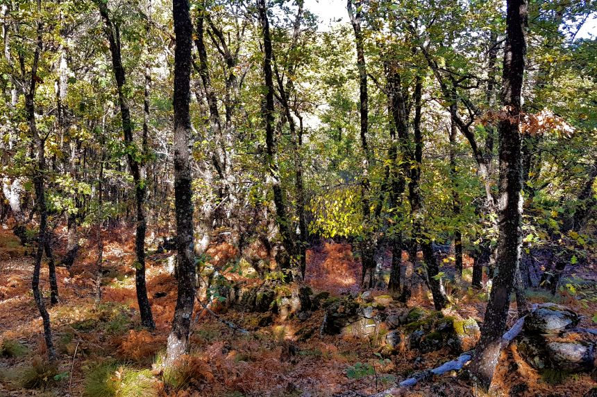 entorno natural de Navaluenga