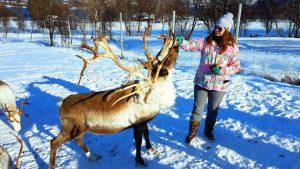 mapaymochila dando de comer a un reno