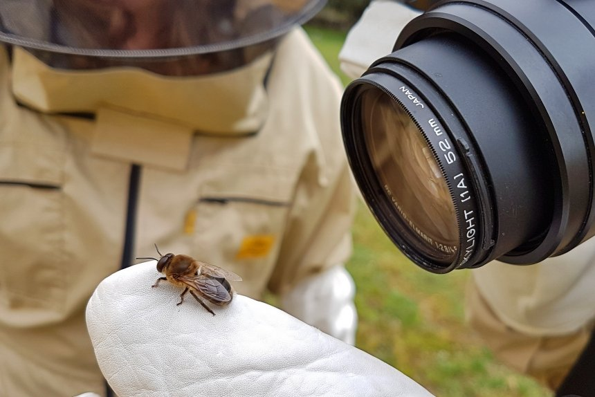 fotografiando un zángano