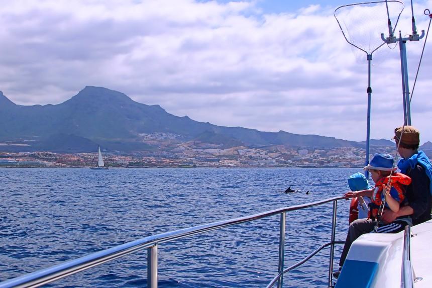 navegando con delfines
