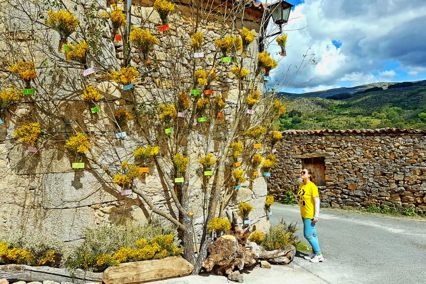 árbol de la existencia en La Angostura