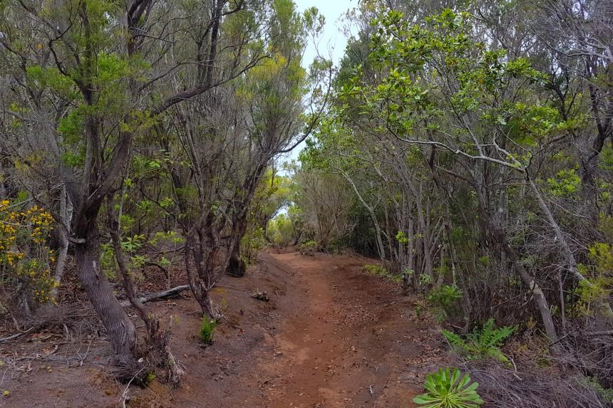 camino a Afur