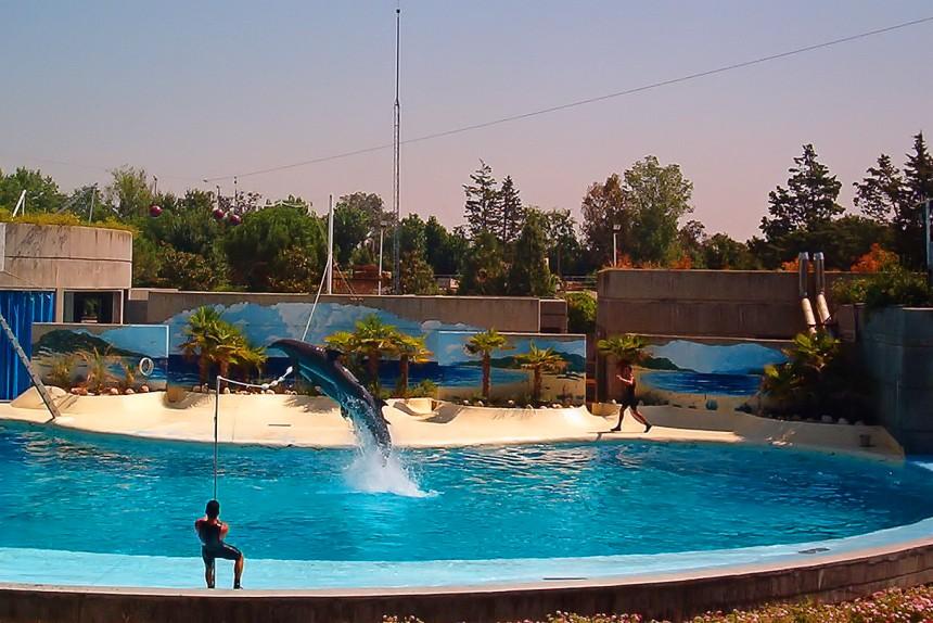 Delfines en el Zoo de Madrid