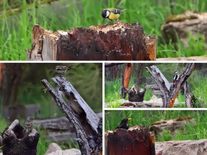 Observación de aves en Gredos
