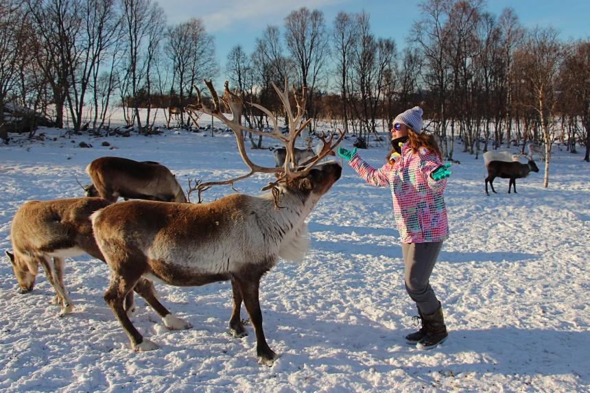 renos sami en Noruega