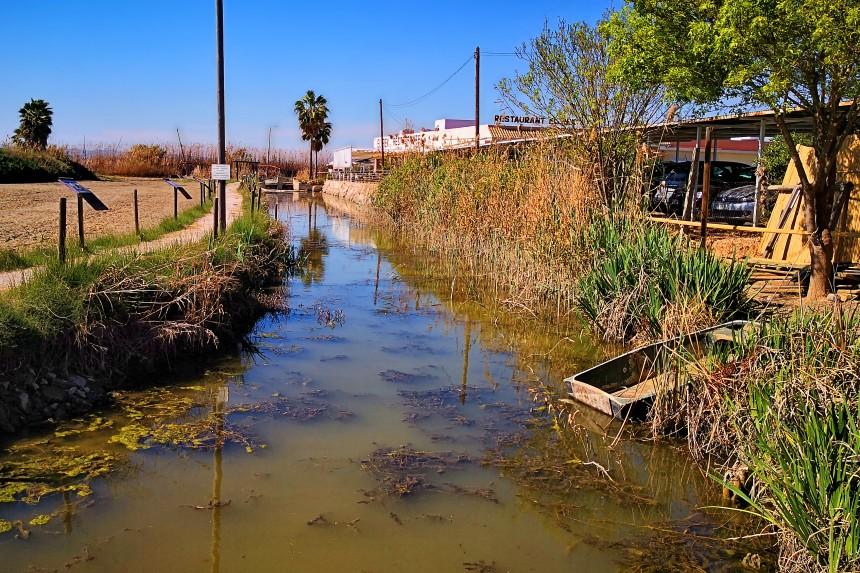 agua verde de la Albufera de Valencia