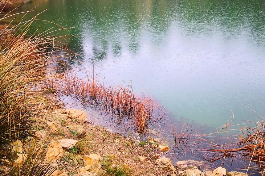 flora de las lagunas de Cañada del Hoyo