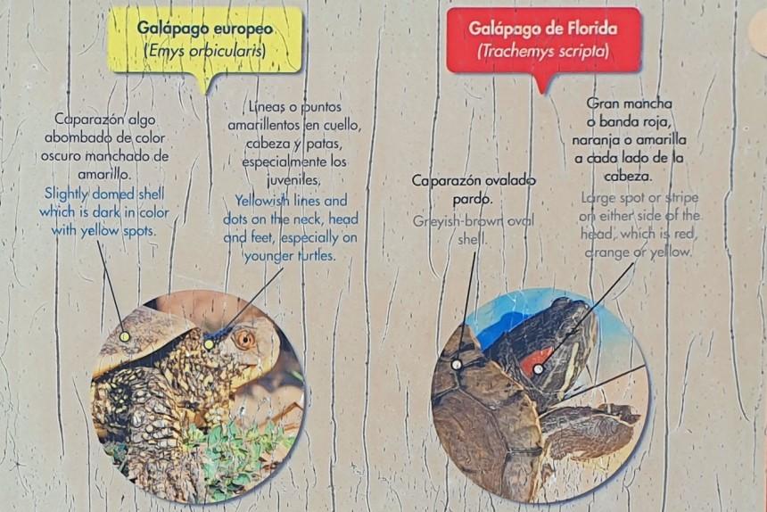 diferencias entre el galápago europeo y el galápago de Florida