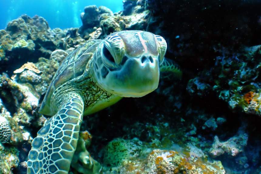 bucear con tortugas en Tenerife